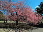 tyanmaruとお友達さん:東京都新宿区・ 新宿御苑