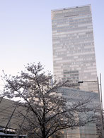 ドンちゃっくんさん :東京駅前周辺(4/1)