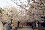 りょうたさん:東京都中央区八丁堀・桜川公園