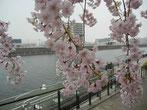 svanejyuさん:環七新神谷橋