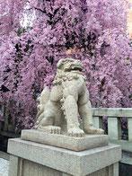 wildside555さん:乃木神社・乃木坂(3/31)