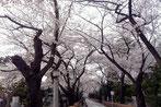 JPさん:東京都港区・青山墓地