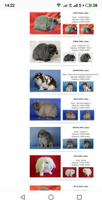 funny-bunny-кролики