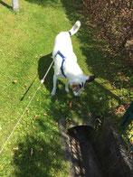 Bild: Joey blickt in den Graben; Smeura Rumänien, Tierhilfe Hoffnung, Tierheim Bielefeld
