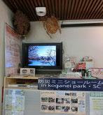●スタンプの横に防災の展示コーナーがあり、上を見上げると大きな蜂の巣(?)のようなものが・・・