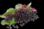 Holunderbeeraroma, Holunderbeeren Lebensmittelaroma, Aroma