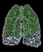ist dampfen gut oder schädlich für die lunge