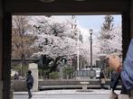 金閣人さん:東京都大田区・田園調布駅(4/2)
