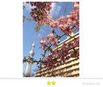 BunBunさん:本所の桜とスカイツリー