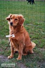 Nova bei der Ausstellung für Hunde ohne Pedigree