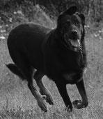 Le chien, ce parfait inconnu