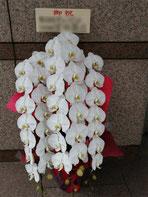 世田谷区の三軒茶屋駅ににお届けした胡蝶蘭。白の三本立ちです。店舗の開店お祝いにお勧めです。