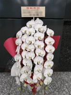 世田谷区池尻ににお届けした胡蝶蘭。白の三本立ちです。企業のオフィス移転お祝いにお勧めです。