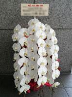 二子玉川ライズ(世田谷区玉川)にお届けした胡蝶蘭。白の三本立ちです。法人役員の就任お祝いにお勧めです。