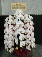 二子玉川ライズ(世田谷区玉川)にお届けした胡蝶蘭。白の三本立ちです。企業のオフィス移転お祝いにお勧めです。