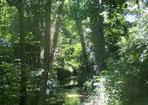 Forêts alluviales à Aulne glutineux et Frêne commun