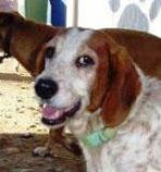 Tani - wurde in Spanien adoptiert!