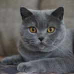 Katzenportrait, Foto pixabay