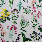Florentiner Papier: Blumenwiese