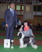 BOB Diedersdorf 2014 Tibet Terrier Tibicinan Pepite Dòr
