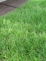 芝刈り・芝貼・芝張り