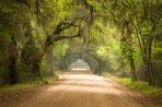Life Forestry – sinnvolle Geldanlage & Hohe Rendite