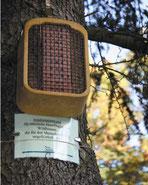 """Im """"Auengarten"""" freuen sich Wildbienen über eine spezielle Nistwand."""