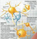 Πρόοδος στην κατανόηση μιας φοβερής ασθένειας