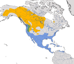 Karte zur Verbreitung der Kleinen Bergente in Nordamerika.