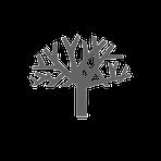 Atelier B , atelier b, benoit chantepie ,ébéniste designer créateur concepteureur mobilier meuble agencement arbre atelier b déssinateur