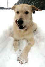Kira MIRA-Hundehilfe Moskau e.V.
