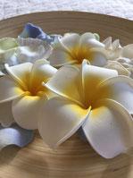 サロンに飾っている花の画像