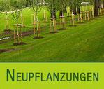 Neupflanzungen | Galabau Hoppe Bernau