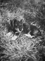 Leopold, Hund, Isernhagen, süß, Dackel