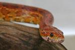 Führungen zu Schlangen