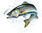 pêcheur de poisson blanc