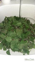 Recette de Pesto d'orties en images propriétés médicinales et nutritives