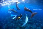 ドルフィンスイム:イルカとドルフィンスイマー
