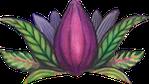 cacao mama cacao pod drawing purple