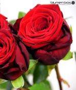 rote Rosen Liebe Valentinstag