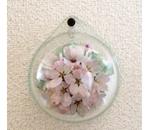 壁掛けS 桜/ φ125×46W ¥7500