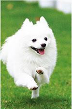 犬と遊べるミート・ザ・ドッグ