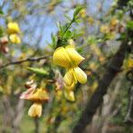 きろい花がさく木