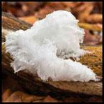 Haareis oder Eiswolle