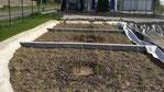 Filtre planté de roseau pour station de lavage auto