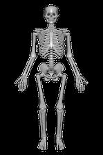 Osteoporose und Heilpraktiker