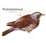 BiHU Vogelführer Natur Hergenrath Völkersberg Wacholderdrossel