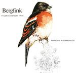BiHU Vogelführer Natur Hergenrath Völkersberg Bergfink
