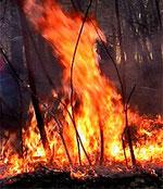 Waldbrandgefahr – besonders in Dürreperioden