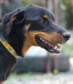 Comment un chien peut retrouver son chemin ?